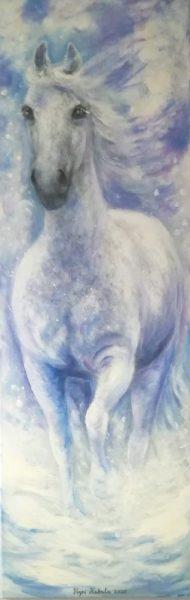 valkoinen hevonen lumessa